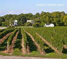 Vineyard Oakwood And Illinois On Pinterest