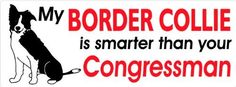 My border collie is smarter than your congressman a border collie bumper sticker  #Border #bumper #Collie #congressman #Smarter #Sticker #Than From BorderCollies.xyz. Click through for more!