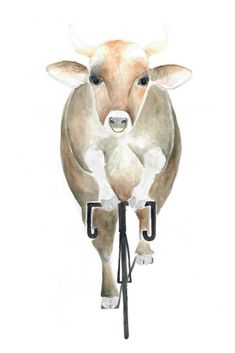 """Riding Cow"", fahrradfahrende Kuh auf RIDING RHINO #cow #Kuh #illustration #watercolor #Aquarell #fahrrad #animal #bicycle #design #Tierbild #veganism #cyclism #minimalism #Konsum #Moral"