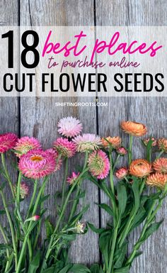 The Best Companies to Purchase Cut Flower Seeds for your Backyard Flower Farm - The Best Companies to Purchase Cut Flower Seeds for your Backyard Flower Farm Source by montanahappy - Growing Flowers, Cut Flowers, Summer Flowers, Cut Flower Garden, Cut Garden, Diy Flower, Flowers For Cutting Garden, Flower Garden Planner, Small Flower Gardens