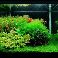 Iiiiiits that time again! Fill in the blank: my favourite aquatic plant is___________. Image  Carlos Eduardo Pires Goncalves