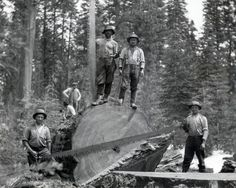 The Red River Lumber Company tree fallers Tree Logs, Trees, Art Of Manliness, Red River, 16 Year Old, Past, California, Explore, History