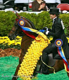 American Saddlebred by Heather Moreton-Abounader Photography, via Flickr