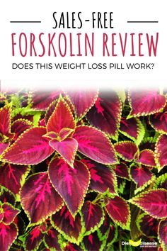 """Forskolin has been touted as """"lightning in a bottle"""" and a """"miracle flower"""" for weight loss. But does it really live up to the hype? This is a sales-free review of forskolin and whether it could help you lose weight. #dietitian #nutritionist #health #diet"""