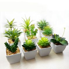 Artificial Succulents, Plastic Flowers, Desert Plants, Green Plants, Dried Flowers, Decoration, Nova, Home And Garden, Landscape