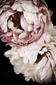 The Green Gallery - Flowers - Ode aan de roos