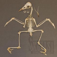Skeleton Photo, Jackdaw, Rook, Natural Forms, Magpie, Wild Life, Ravens, Ancestry, Collages
