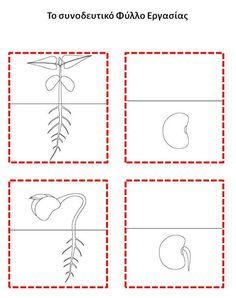 Αποτέλεσμα εικόνας για η σπορα φυλλα