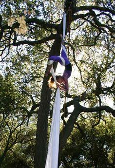 aerial silks + tree =