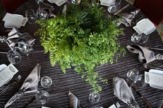 love the ferns as the centerpiece