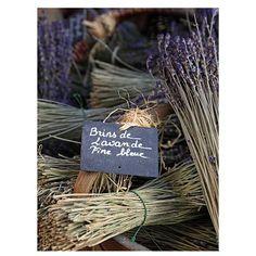 Schilderij canvas Lavendel bossen 29x22 cm | goedkoop kopen € 2,50 | Schilderijen | Wonen | Online Winkel | Discount Postorder Warenhuis Budgetland