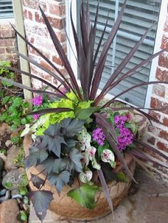Great blog from a lady in Grapevine.  Lots of combo plant pots (Sun, part sun, and shade)