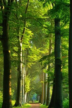 wonderous-world:  Tallents by Lars van de Goor
