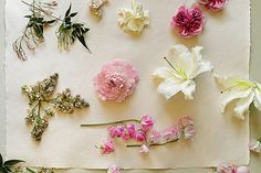 more goodness by Amy Merrick, via Flickr