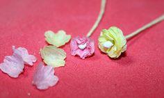 Carnation5