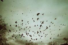 by heddaselder, via Flickr