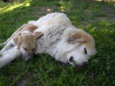 The big one looks exactly like my old dog Kobe, R.I.P babe