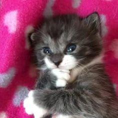 This Cute Kitten Will Melt Your Heart!