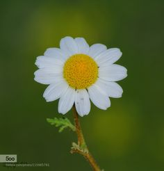Flowers by azsxdc1209. Please Like http://fb.me/go4photos and Follow @go4fotos Thank You. :-)