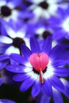 Heart on flowers