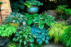 Small Outdoor Spaces, Astilbe, Clematis, Dream Garden, Gardening Tips, Garden Design, Plants, Inspiration, Garden