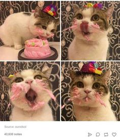 There's a cat licking your birthday cake. It's your birthday today.