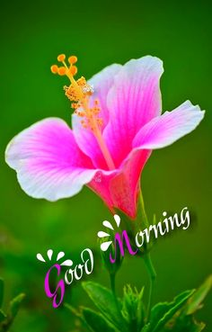 Are you looking for ideas for good morning handsome?Browse around this site for perfect good morning handsome inspiration. These funny images will make you happy. Good Morning Handsome, Good Morning Sunshine, Good Morning Messages, Good Morning Greetings, Good Morning Good Night, Good Morning Wishes, Morning Quotes, Morning Blessings, Good Morning Beautiful Pictures