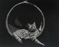 Edward Weston /Cat in Basket Edward Weston, Henry Westons, Modern Photography, Minimalist Photography, Color Photography, Black And White Posters, A Level Art, Vintage Cat, Photo Black