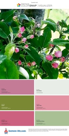 Colors of spring are matched in this pink and green Mother's Day inspired flower blooming apple blossom tree color palette!  #interiordesign #interior #design #interiorinspo #designinspo #inspiration #color #colorinspo #colordesign #colorpalette #colorpaletteinspo #colorpalettedesign #colorscheme #colorschemeinspo #paint #paintinspo #colorschemedesign #pinkandgreen #mothersday #floweringtrees  #paintcolorideas #paintdesign