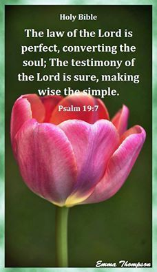 Image result for tulips with kjb verses