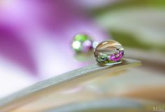 Water Lens by Miki Asai on 500px