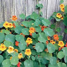 Outdoor Pergola, Outdoor Plants, Diy Herb Garden, Garden Plants, Herbs Indoors, Permaculture, Horticulture, Garden Projects, Houseplants