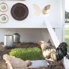 Stylish Chicken Coop