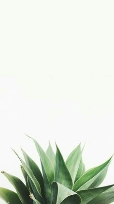 green fake plant • phone wallpaper !