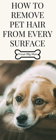 How To Remove Pet Hair From Every Surface | Dog Shedding | Cleaning Hacks |