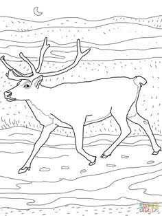 caribou coloring page free printable coloring pages within peary caribou coloring pages Deer Coloring Pages, Cartoon Coloring Pages, Free Printable Coloring Pages, Coloring Pages For Kids, Coloring Sheets, Coloring Books, Free Printables, Toddler Coloring Book, Deer Pictures