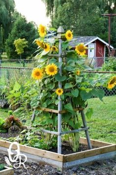 Front Yard Garden Design Delightfully Pretty Wooden Sunflower Pyramid - DIY Flower tower ideas are a great way to add some color, and the height really helps you maximize your space. Find the best designs! Mailbox Landscaping, Diy Garden Trellis, Front Yard Landscaping, Plants, Backyard Garden, Country Gardening, Plant Structure, Garden Structures, Screen Plants