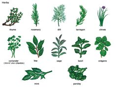 Herbs Pictures and Names   Would You Do This To Become A Leader In The Spice Industry?