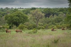 The Majingilane line up opposite Varty Camp.  http://blog.londolozi.com/2014/01/the-week-in-pictures-110/