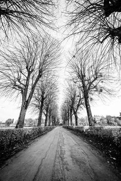 Viale delle Volte - Ormai le foglie sono cadute