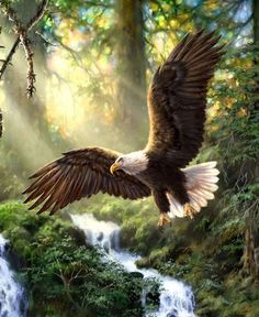 Buy Eagles flying in the wood - Birds Paint By Number kit or check our new modern collections for adults paint by numbers. Relax and enjoy your canvas painting The Eagles, Bald Eagles, Eagle Painting, Diy Painting, Nicolas Vanier, Eagle Pictures, Eagle Images, Eagle Art, Wood Bird