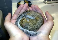 My Dad loved squirrels so I have a special place in my heart for them and this is absolutely adorable!