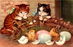 'Easter Greetings' ~ Vintage postcard with kittens and Easter chicks. Vintage Cat, Vintage Easter, Vintage Greeting Cards, Vintage Postcards, Easter Cats, Happy Easter Greetings, Old Cards, Here Kitty Kitty, Illustrations