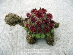 topiary forms   ... forum: How to Make Succulent Wreaths and Topiary (All Things Plants