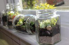 How to Make a Terrarium: How To Make A Terrarium With Glass Jar Terrarium Design For Window Sill Decor Terrarium Diy, How To Make Terrariums, Terrarium Containers, Glass Terrarium, Making A Terrarium, Small Terrarium, Small Glass Jars, Cactus Y Suculentas, Edamame