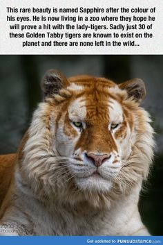 Animal Memes Of The Day 32 Pics – – Lovely Animals Wo… Tier Meme Des Tages 32 Bilder – – Schöne Tierwelt Funny Animal Memes, Cute Funny Animals, Funny Animal Pictures, Cute Cats, Big Cats, Funny Photos, Beautiful Creatures, Animals Beautiful, Beautiful Eyes
