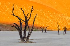 "Dead Vlei sunrise.  ""The photographic mecca of Dead Vlei in the Namibian Desert and Dunes of Sossusvlei""  by Christopher R. Gray."