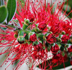 http://fineartamerica.com/featured/nature-unravels-barbara-chichester.html