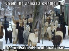 Funny Animal Captions - Our End Will Be Warm and Fluffy