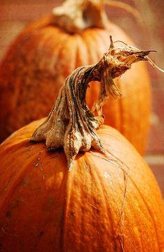 Country Fall, Pumpkins - K. It's The Great Pumpkin, A Pumpkin, Pumpkin Garden, Autumn Day, Autumn Leaves, Theme Nature, Happy Fall Y'all, Mabon, Samhain